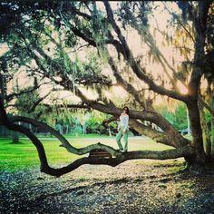 Old tree in St. Augustine, fl