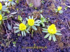 Spring in my garden!  #spring #gardening #flower
