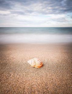 Shell par Samir FAHIM #Algerie #photography
