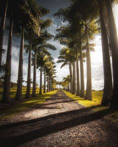 Palm-lined path (Hilo, Hawaii) by Gabe Rodriguez (@831gaberodriguez) on Instagram
