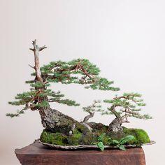 Amazing bonsai forest by Ryan Neil   https://www.facebook.com/bonsaiherald/photos/a.1103798036300566.1073741829.1051541914859512/1114287778584925/?type=1