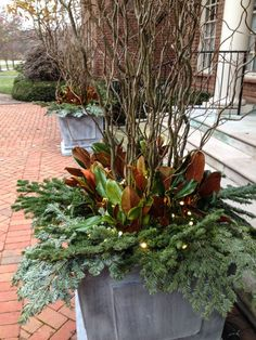 Black Willow, Noble Fir and Magnolia - Holiday Planters by McCullough's Landscape and Nursery