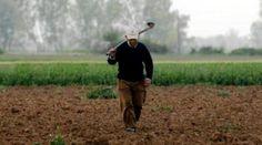 Πολύ μικρότερη η επιβάρυνση για τους μικρούς και μεσαίους αγρότες :: left.gr