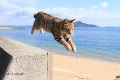 飛び猫?!猫のジャンプ中を写真に収めた五十嵐健太さんの作品が大人気!