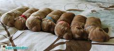 Newborn Australian Labradoodle puppies.  #moocowlabradoodles #moocowminis