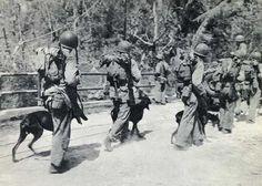 Devil Dogs of Guam...Doberman Marine Dogs of WWII