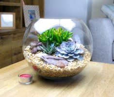 Large Glass Globe Succulent Terrarium with 3 Beautiful Succulents Large Terrarium, Terrarium Plants, Glass Terrarium, Succulent Terrarium, Terrarium Kits, Hanging Succulents, Faux Succulents, Cooking With Charcoal, White Gravel