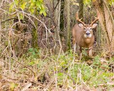 Great Deer Hunting Tips For Tree Stand/Ground Blind Placement, Spotting Deer and Taking The Critical Shot