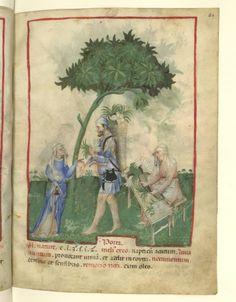 Nouvelle acquisition latine 1673, fol. 24, Marchand de poireaux. Tacuinum sanitatis, Milano or Pavie (Italy), 1390-1400.