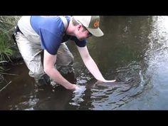 Aufsteiger: Meerforellenangeln im Fluss | Dicht am Fisch