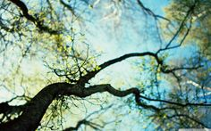 Cute Squirrel Tree Animal Spring Branch Watch iPhone s Wallpaper