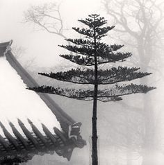 Temple Tree, Jonjaanji, Jeju Island, South Korea, 2012 by Michael Kenna
