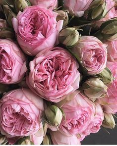 Image about pink in flower power by S I R I on We Heart It My Flower, Pink Flowers, Beautiful Flowers, Home And Garden Store, No Rain, Flower Aesthetic, Pink Peonies, Peony, Peonies Bouquet