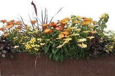 Zmiešané výsadby   Kvety a Záhrada http://kvetyazahrada.platontest.sk/clanky/zmiesane-vysadby