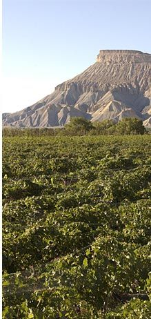 Plum Creek Winery : Palisade Colorado - Part of the great CO wine tour!!