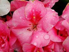 Raindroops by Kathleen Mendel
