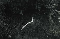 Masao Yamamoto, Kawa 1561, photograph, root, soil
