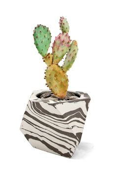Image of Black & White Continuous Striped Planter