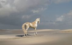 Golden Akhal Teke Yes, he is real...