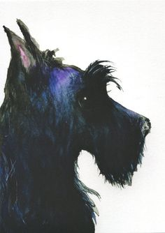 Scottish Terrier matt Art Print Scottie Dog