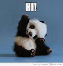 Image result for animals saying hi