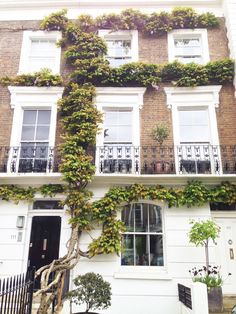 A girl's dream- ivy walls, notting hill London Townhouse, London House, Notting Hill, Beautiful Architecture, Architecture Design, English Architecture, Ivy Wall, House Goals, My Dream Home