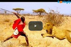 Brave African Massai Man steal food from a #Lion! Don't miss out on this  #funnyvideos #funny