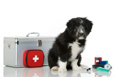 Dog First Aid Kit For Your Canine Companion | The Prepared Pet Owner