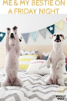 Me and My Bestie BFF on a Friday Night Like... Ready to Rock. Dancing party dogs, jack russel terrier doggos. Funny dog pictures with cations meme.