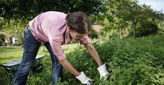 Pflanzenschutz geht auch ohne Chemie. Viele Hobbygärtner schwören vor allem auf Brennnesseljauche. Hier erklären wir Ihnen, wie Sie die Pflanzenjauche richtig ansetzen.