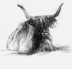Highland, Artist Sean Briggs producing a sketch a day, prints available at https://www.etsy.com/uk/shop/SketchyLife #art #cow #drawing #highland #http://etsy.me/1rARc0J