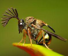 わぁお! Gangsta Wasp