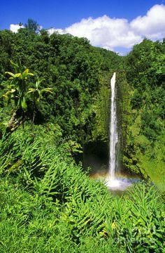 ✮ Akaka Falls - Akaka Falls State Park, Hamakua Coast, The Big Island, Hawaii