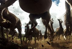 The power of the Criollo horses at the Cabanha Ipuã located in Paranà, Brazil. Photo by Chris Schmid