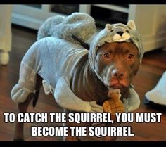 to catch the squirrel, you must become the squirrel . ~ pitbullfood.com ~ pitbullpersonalchecks.com