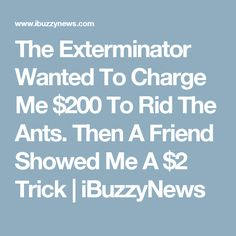 The Exterminator Wanted To Charge Me $200 To Rid The Ants. Then A Friend Showed Me A $2 Trick | iBuzzyNews
