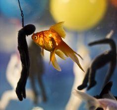 IB art project in a fish tank using model magic, playroom balls, foam balls, and GOLDFISH  http://pinterest.com/pin/26740191507808440/  http://pinterest.com/pin/26740191507808438/