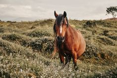 Anglesey, Photography Aesthetic, Photo Style, Wild Horses, Vsco, Ootd, Facebook, Twitter, Drawings
