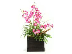 Rent the Pink Orchid Plant