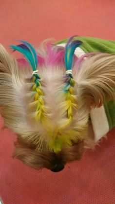 Baby Puppies, Cute Puppies, Cute Dogs, Dog Grooming Salons, Pet Grooming, Yorkie Hairstyles, Animals And Pets, Cute Animals, Shih Tzu