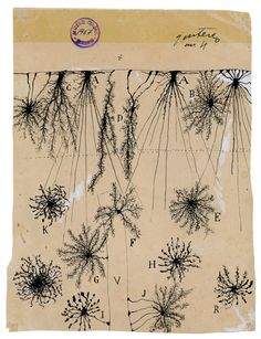 Santiago Cajal