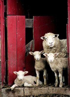 family portrait? =).