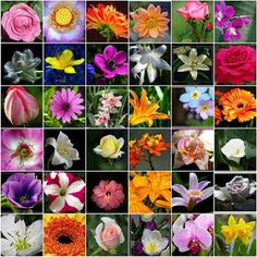 Flower Names List and Meanings of Flowers