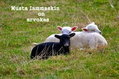 The black sheep is valuable, too Finland Black Sheep, Lambs, Farm Animals, Finland, Parka, Peace, Hoodies, Room