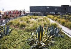 green roof terrace. Photo by Michael Wee.