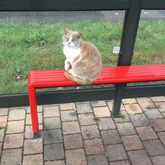 Missy was a 13-year-old cat who would hang out at a bus stop in Leigh Park, England, each day. Missy was there so often that she became a fixture and commuters would look forward to seeing her every day. | People Have Set Up A Memorial For A Bus-Stop Cat Who Was Viciously Killed