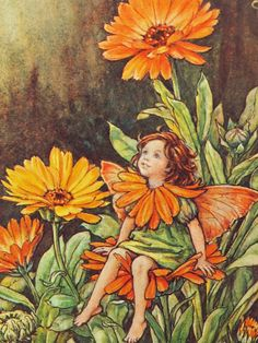 The Marigold Fairy. Vintage flower fairy art by Cicely Mary Barker. Taken from 'Flower Fairies of the Garden'. Click through to the link to see the accompanying poem. Cicely Mary Barker, Elfen Fantasy, Fantasy Art, Flower Fairies, Fairies Garden, Marigold Flower, Marigold Tattoo, Images Vintage, Fairy Pictures