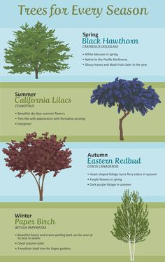 Trees for the Backyard: Trees for Every Season Backyard Trees, Landscaping Trees, Outdoor Landscaping, Outdoor Plants, Outdoor Gardens, Trees And Shrubs, Flowering Trees, Trees To Plant, Evergreen Landscape