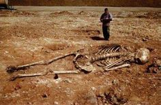 Hoax images purport to show skeletons of human giants (biblical Nephilim or Canaanites) allegedly found in Greece.: Giant Skeletons Found in Greece? Ancient Aliens, Ancient History, Giant Skeletons Found, Human Giant, Nephilim Giants, Nephilim Bones, Nephilim Proof, Human Skeleton, Skeleton Bones