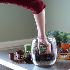 terrarium tutorial Pinterest: @RaelinaTerry